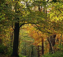 Autumn Path by georgekirk1