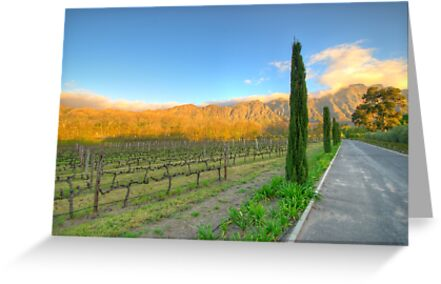 Franschhoek Vineyard, South Africa by David  Phillips