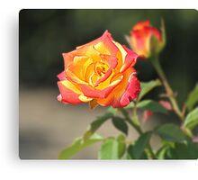 Rose HDR Canvas Print