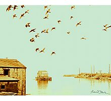 Flight at Peggy's Cove Photographic Print