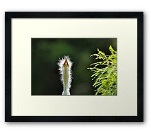 Hey Ma........Is That You Way Up There???? Framed Print