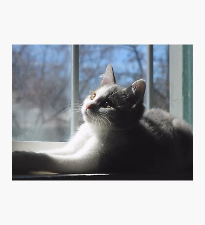 Sweet Baby Blue Photographic Print
