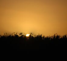 Everglades Sunset by KeithRandall