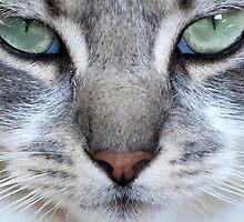 Feline face by KeithRandall