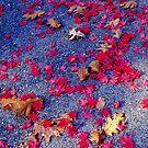 Ladies Series - Leaf Sparkle by Deborah Crew-Johnson