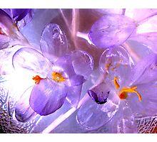 FABULOUS FLOWERS Photographic Print