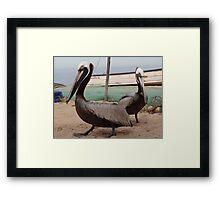Pelicans I - Pelicanos Framed Print