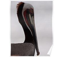 Pelicans III - Pelicanos Poster