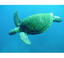 Turtle in the Blue Photographic Print