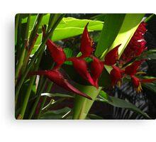 Tropics - Tropical Canvas Print