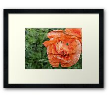 Bark layer Poppy Framed Print