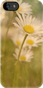 Sparkling Daisy IPhone Case by Shelly Harris