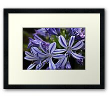 Purple and white flowers Framed Print