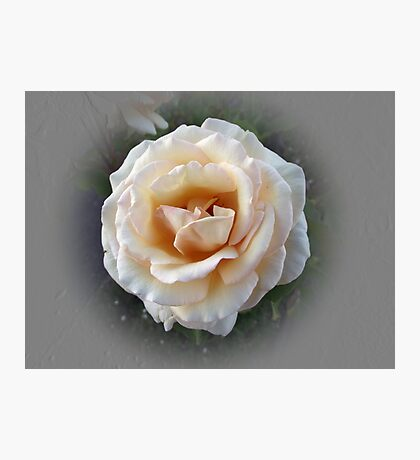 Pale Orange Rose Photographic Print