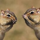 Chipmunk Chatter by Lori Deiter