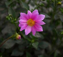 Flower2 by Linga Reddy Anuga