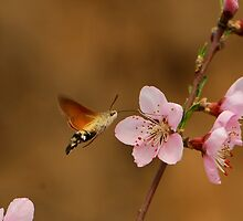 pink and hawkmoth by davvi