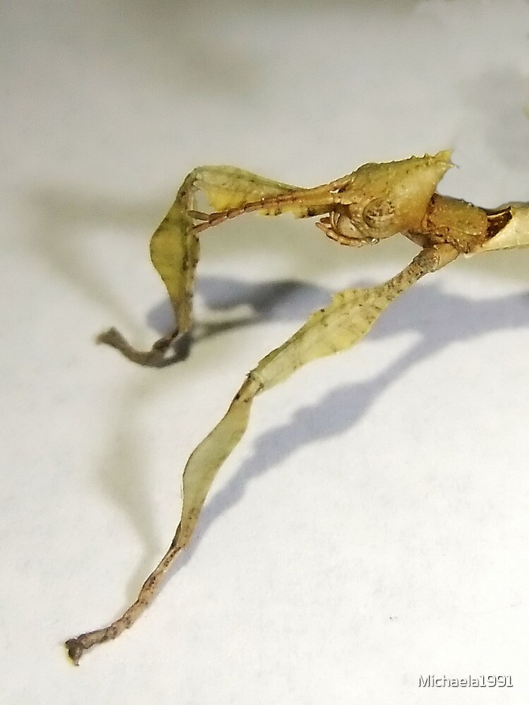 Baby Macleays Spectre Stick Insect by Michaela1991