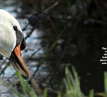 The curious swan by whimsicalworks