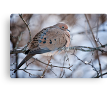 Mouring Dove In Shrubs Canvas Print