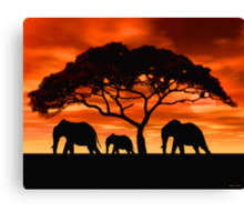 Acacia Elephant Sunset Canvas Print