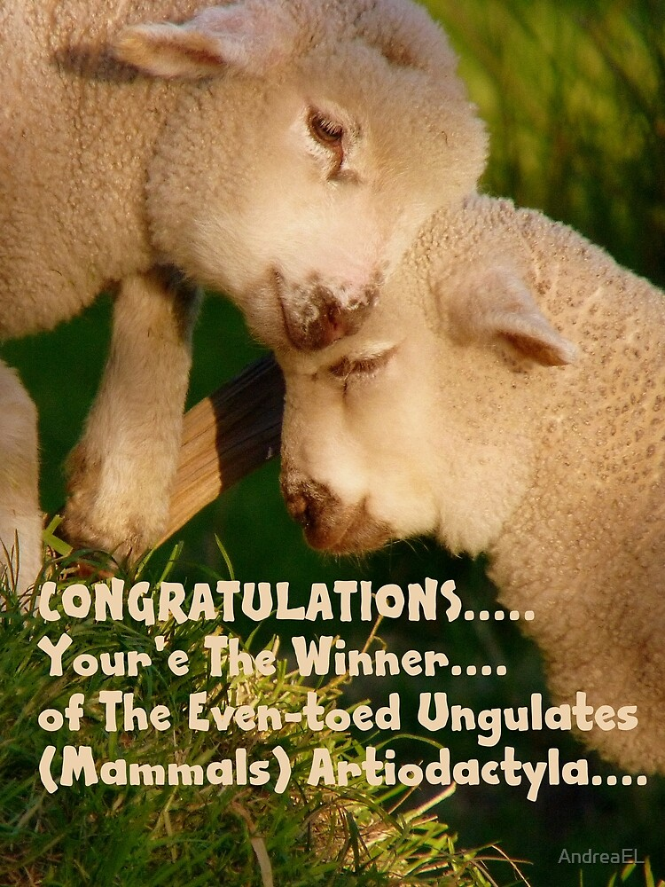 Challenge WINNER BANNER for Even-toed Ungulates - Lambs - NZ by AndreaEL