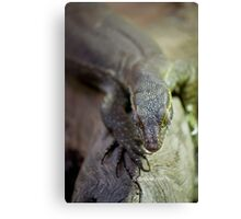up close lizard! Canvas Print