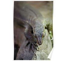 up close lizard! Poster
