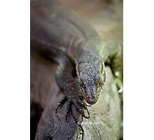 up close lizard! Photographic Print