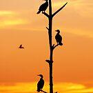 Cormorants Sunset by ArtThatSmiles