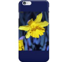 Yellow Daffodil in August iPhone Case/Skin