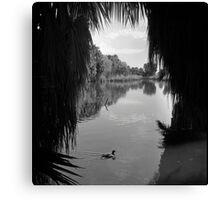 View through the Palms Canvas Print