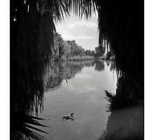 View through the Palms Photographic Print