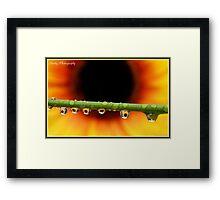 """""""Sunflower droplets"""" Framed Print"""