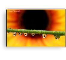 """Sunflower droplets"" Canvas Print"
