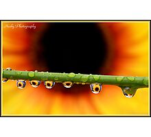 """""""Sunflower droplets"""" Photographic Print"""