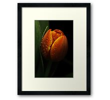 The orange tulip Framed Print