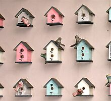 A Bevy of Bird Houses by Ali Brown