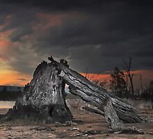 Fire Wood - Lake Fyans The Grampians Victoria by Graeme Buckland