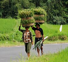 Farmers carrying grass on their heads by Michael Brewer