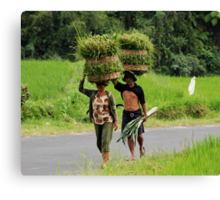 Farmers carrying grass on their heads Canvas Print
