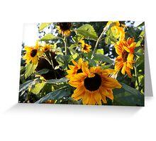 Sun Flowers. Greeting Card