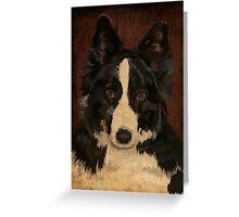 Jasper - border collie Greeting Card
