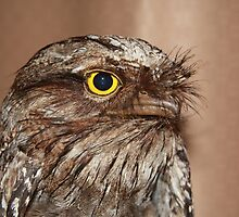 Marbled frogmouth (Podargus ocellatus) by Peregrinate