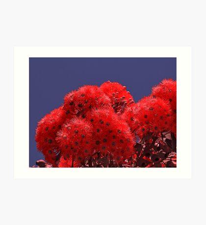 Orange Eucalyptus Flowers Art Print