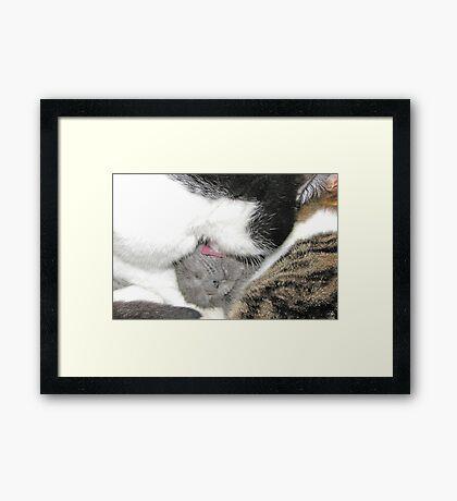 Feel the Love Framed Print