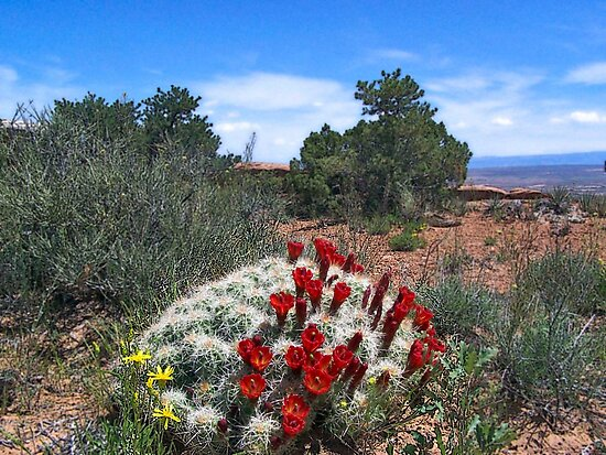Scarlet Cactus by debidabble
