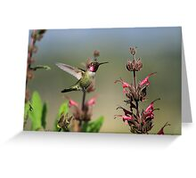 Ruby Throated Hummer Frozen With Style Greeting Card