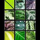 Collection of Leaves 1 by Jacinthe Brault