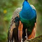 Does It Get Any Better--Beautiful Bird by Joe Jennelle
